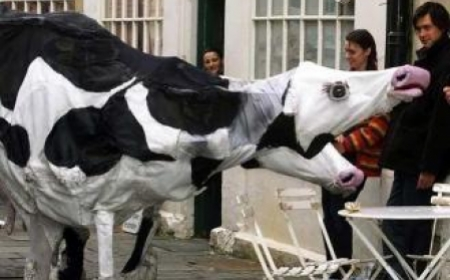 Giant Cows