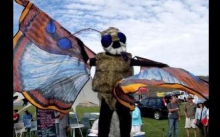 The Bogon Moth