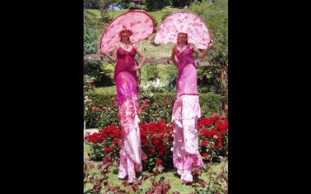 Pink Ladies on Stilts