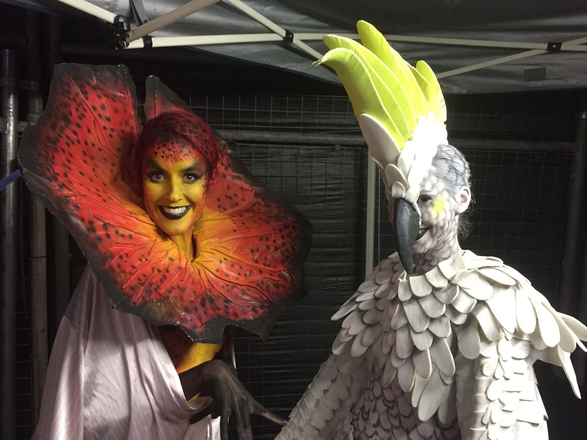 Cockatoo and Frilled neck Lizard